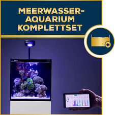 meerwasser aquaristik onlineshop aquaristik gesch ft hp aquaristik. Black Bedroom Furniture Sets. Home Design Ideas