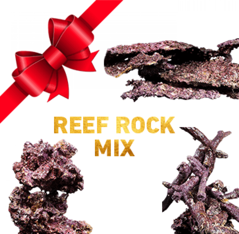 Exclusiv Real Reef Rock MIX SET passend für Ihr Aquarium