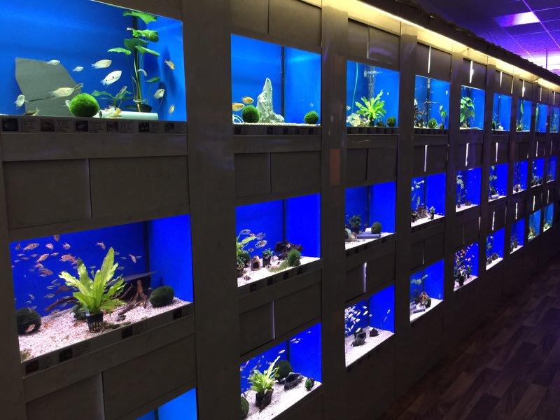 s wasserfische kaufen hp aquaristik bei m nchen hp. Black Bedroom Furniture Sets. Home Design Ideas